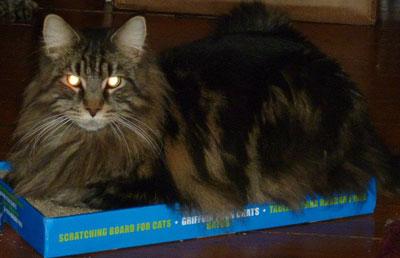 catitcboardscratcher