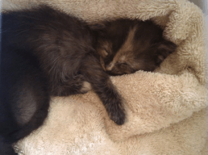 Kittens, Kittens, Kittens…